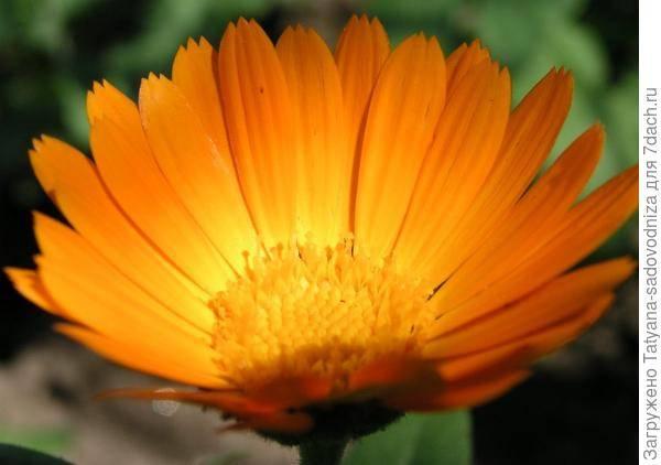 Как правильно собрать и засушить лекарственные растения?
