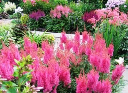 Лилейники в ландшафтном дизайне: фото, сочетание растений, отзывы