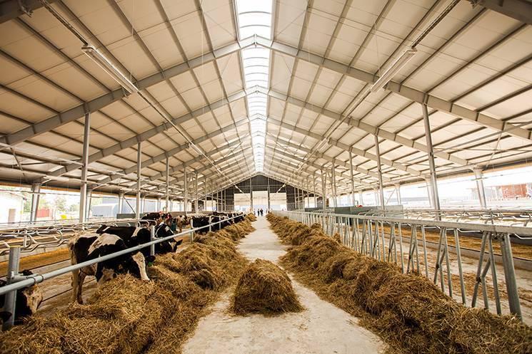 Готовый бизнес-план разведения крупного рогатого скота мясного и молочного направления