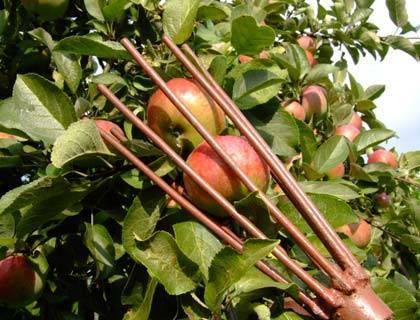 Обзор плодосборников/плодосъемников: 5 моделей на любой вкус