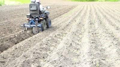 Правильная посадка картофеля мотоблоком с окучником, плугом или картофелесажалкой