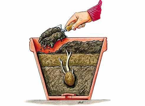 Особенности выращивания картофеля в мешках и подробное описание технологии