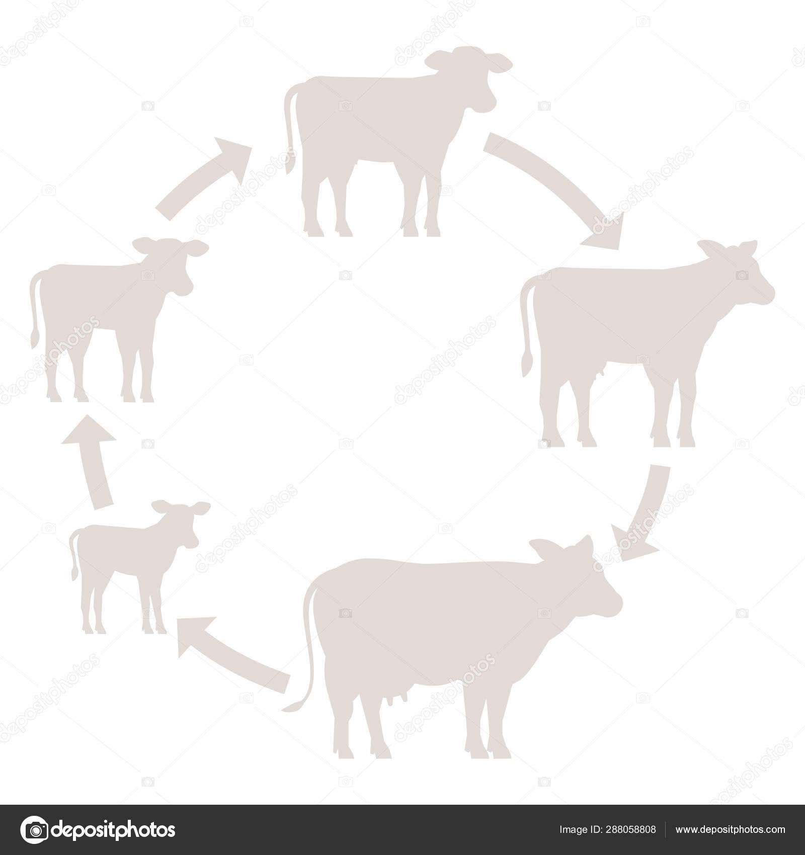 Как построить ферму для крс: основные принципы и требования