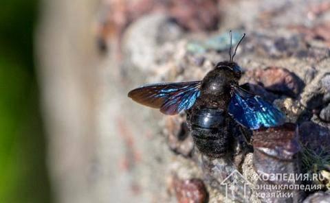 Как можно избавиться от пчел соседа, чего боятся пчелы, как убрать пчелиный улей