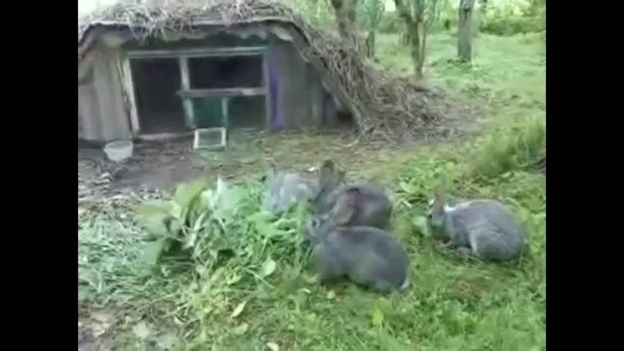 Разведение и содержание кроликов в ямах