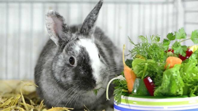 Когда можно случать крольчиху после окрола?