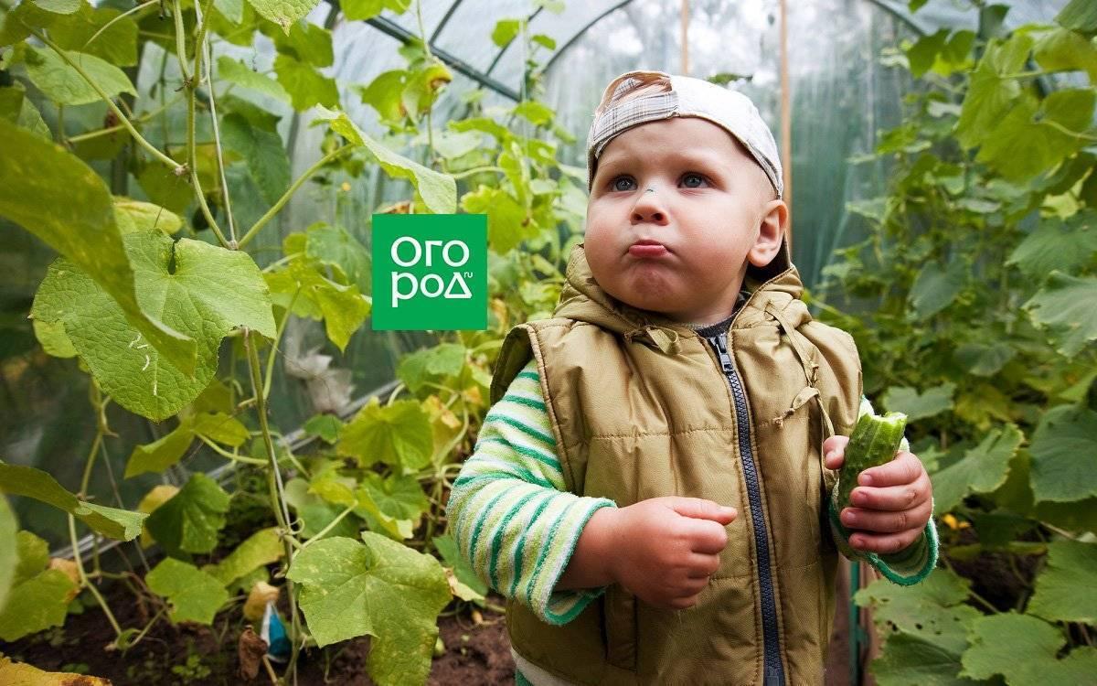 Почему огурцы горькие и как с этим бороться: советы опытных огородников и методы устранения причины горечи (100 фото)