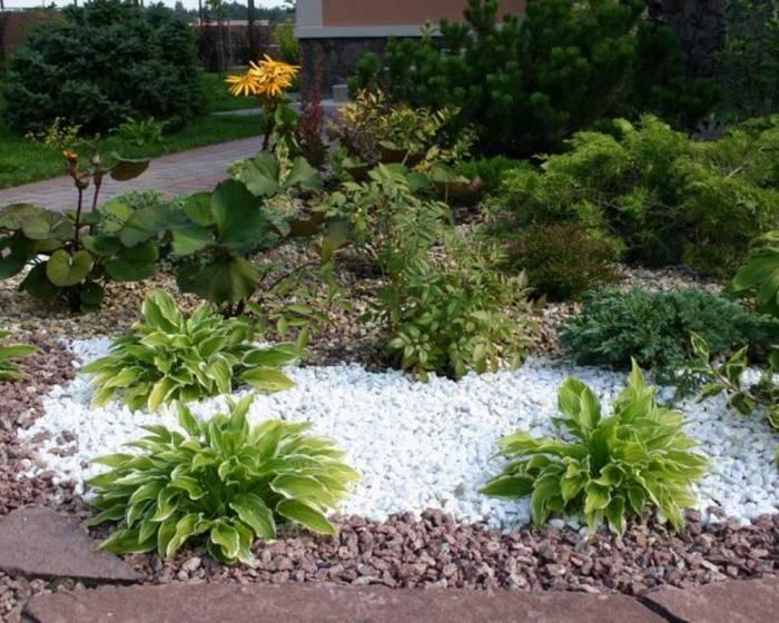 Если в саду тень: используем хосту для украшения участка