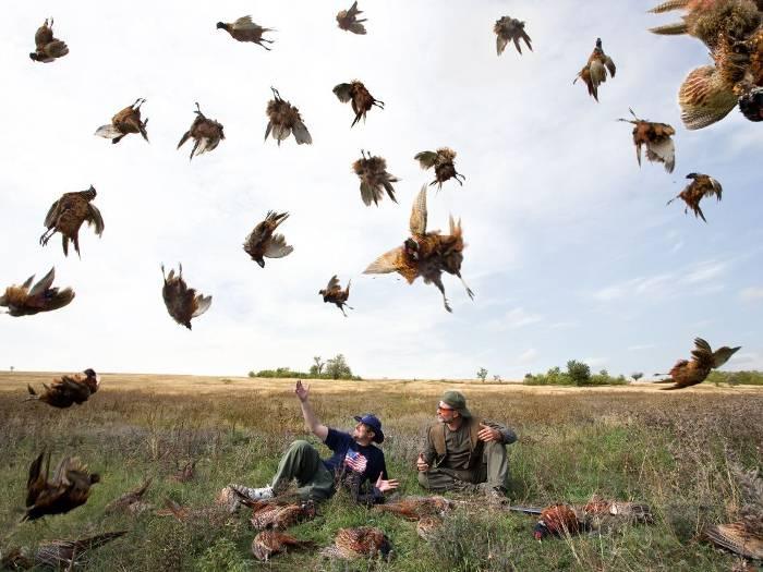 Ловушка на фазана своими руками