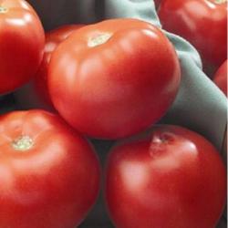 Томат хохлома: описание и характеристика сорта, отзывы, фото, урожайность | tomatland.ru