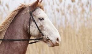 Болезни лошадей: современные методы диагностики и лечения