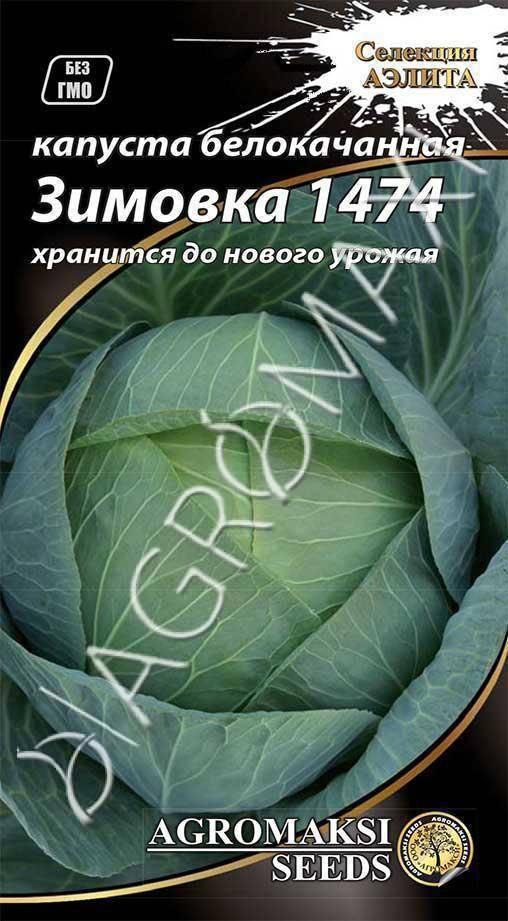 Описание и характеристика сорта капусты зимовка