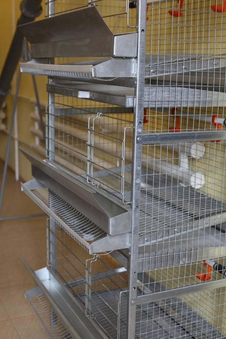 Клетка для цыплят бройлеров — как сделать своими руками, размеры и чертежи