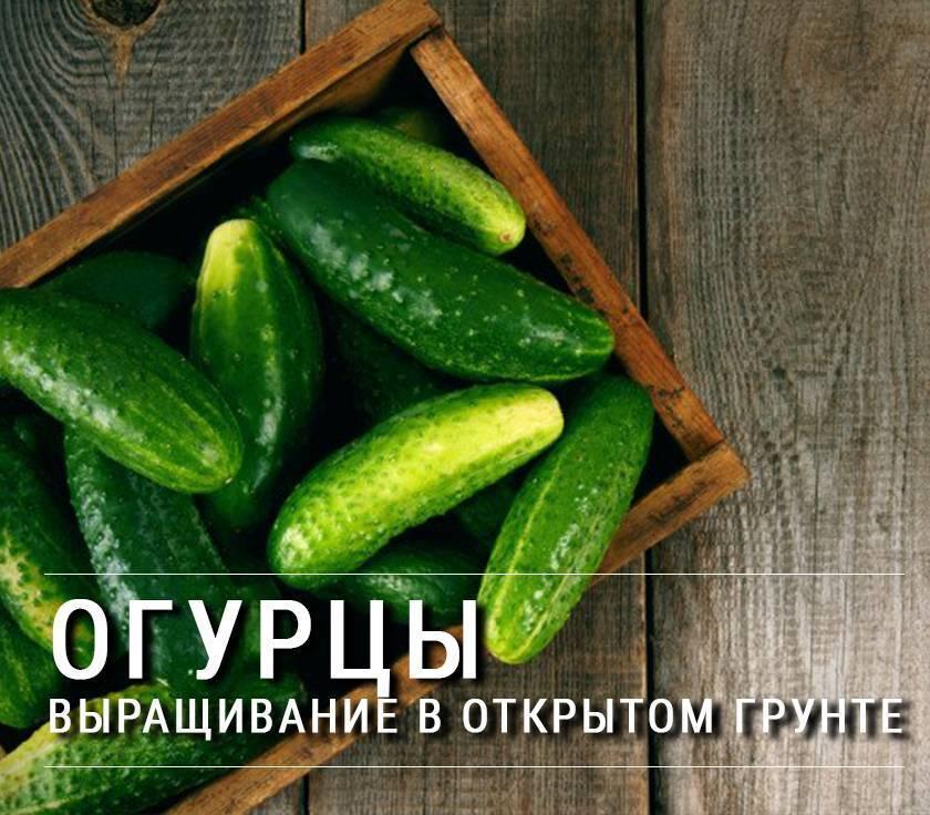Севооборот овощных культур на дачном участке, таблица - подробная информация!