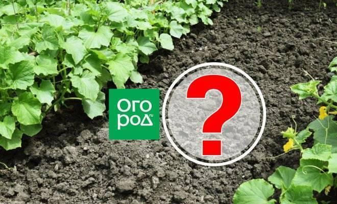 Можно ли выращивать в одной теплице помидоры и дыни