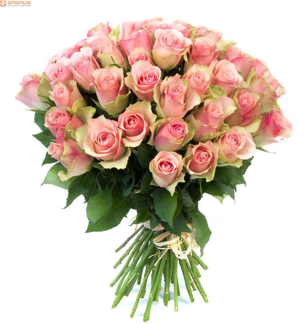 Необычные сорта роз