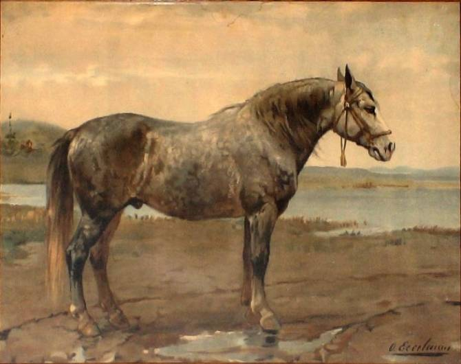 Лошадь советский тяжеловоз: характеристика, особенности содержания в домашних условиях