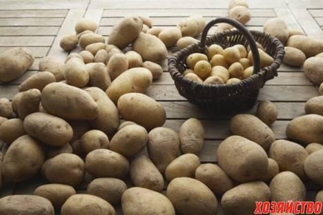 Как правильно сажать картошку чтобы получить хороший урожай