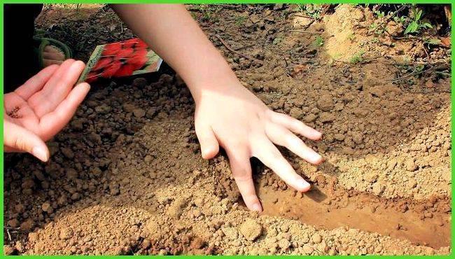 Редиска в теплице из поликарбоната: когда и как сажать семена, чтобы получить хороший урожай?