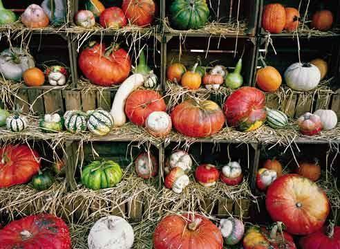 Все о декоративной тыкве вьющейся: посадка семян, выращивание и уход