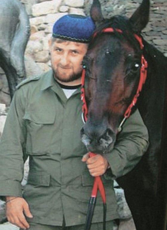 Самые дорогие и лучшие лошади в мире: характеристики пород и цена
