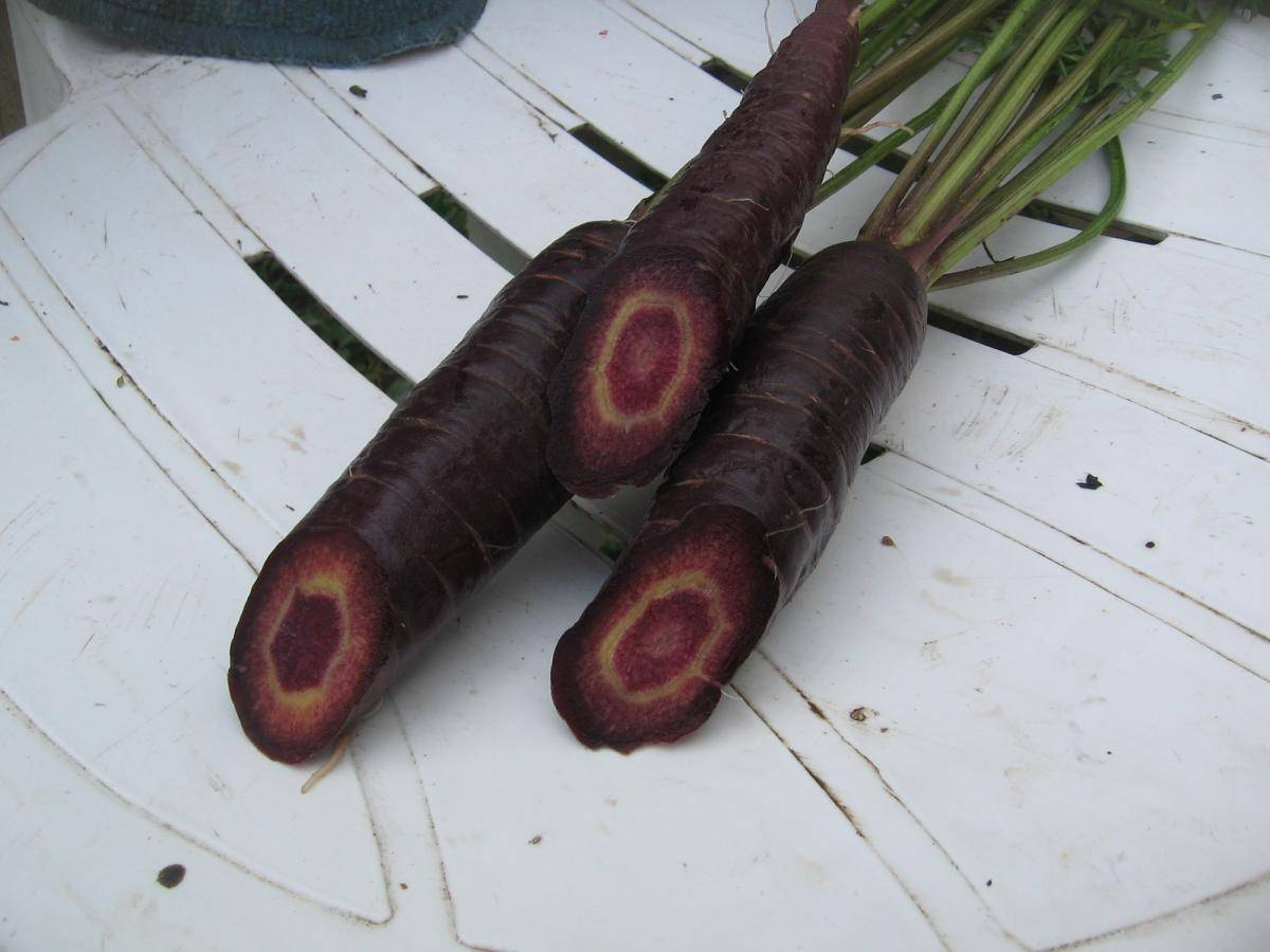 Черная морковь: виды, польза. сок черной моркови