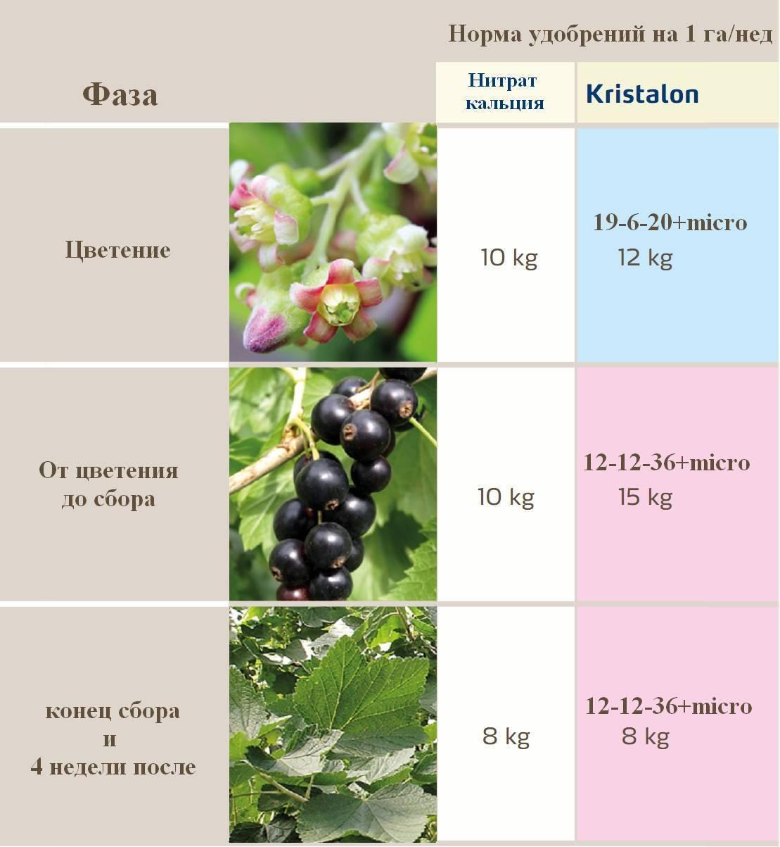 Чем подкормить смородину и крыжовник весной - дрожжи и зола в качестве удобрения