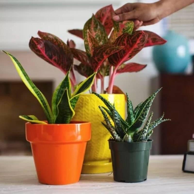 Правила полива комнатных растений и цветов
