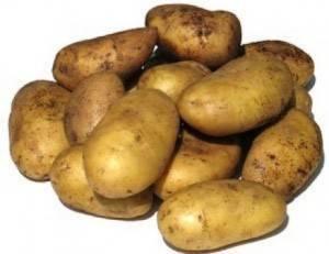 Подробная характеристика и описание картофеля сорта уладар - общая информация - 2020