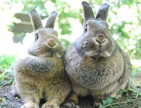 Болезни кроликов - описание, фото и видео