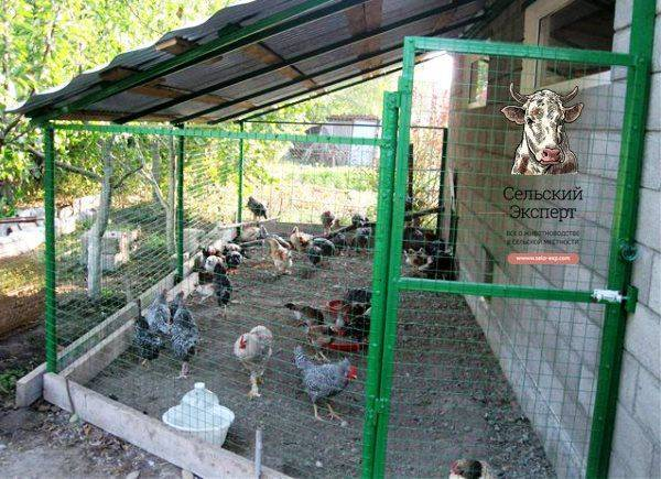 Вольер для куриц своими руками: как выбрать место и определить площадь, как построить правильно?