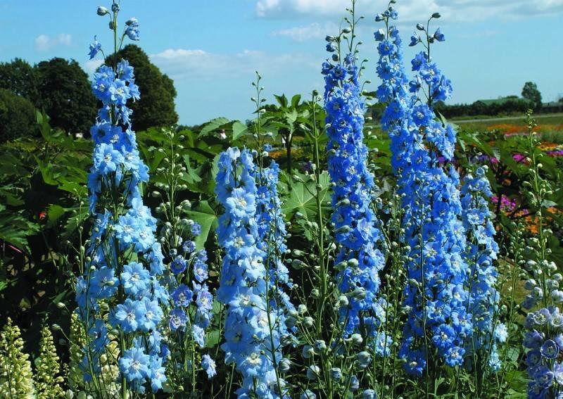 Варианты обрезания каланхоэ: после цветения, для пышности и в домашних условиях