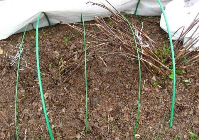 Подготовка гортензии к зимовке – практическое руководство для начинающих садоводов