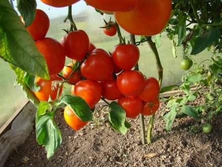 Что можно посадить в открытом грунте после капусты