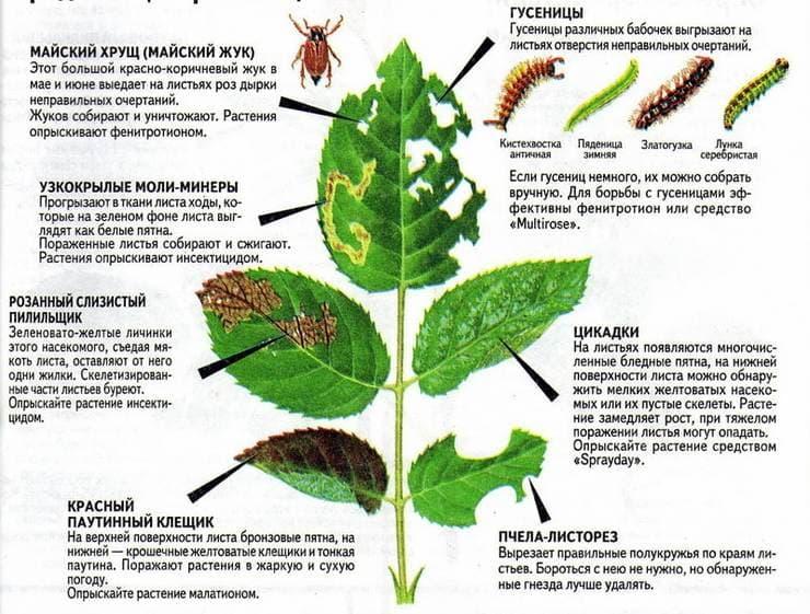 Знать врага в лицо: топ 5 вредителей комнатных растений