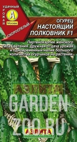 Гибрид огурцов «настоящий полковник f1»: фото, видео, описание, посадка, характеристика, урожайность, отзывы