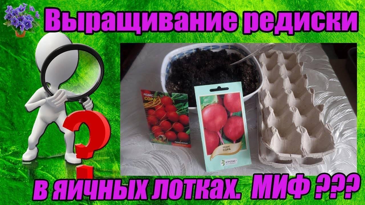 Каждому корнеплоду — отдельную лунку! как вырастить редиску в яичных кассетах и получить отличный урожай?