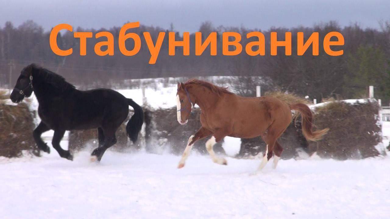 Психология: лошади скачки - бесплатные статьи по психологии в доме солнца