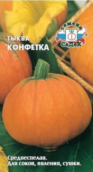 Описание и характеристика видов тыквы
