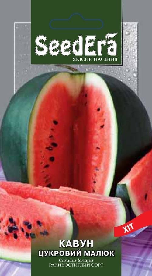 Описание и характеристики арбуза сорта сахарный малыш, выращивание