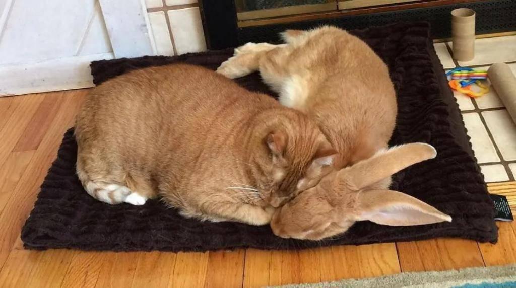 О кролике дома: все о декоративных кроликах в домашних условиях, дрессировка