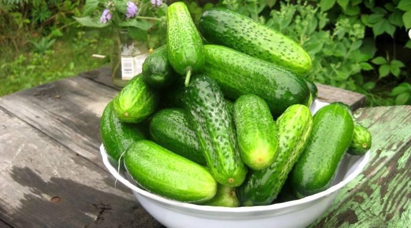 10 секретов отменного урожая огурцов