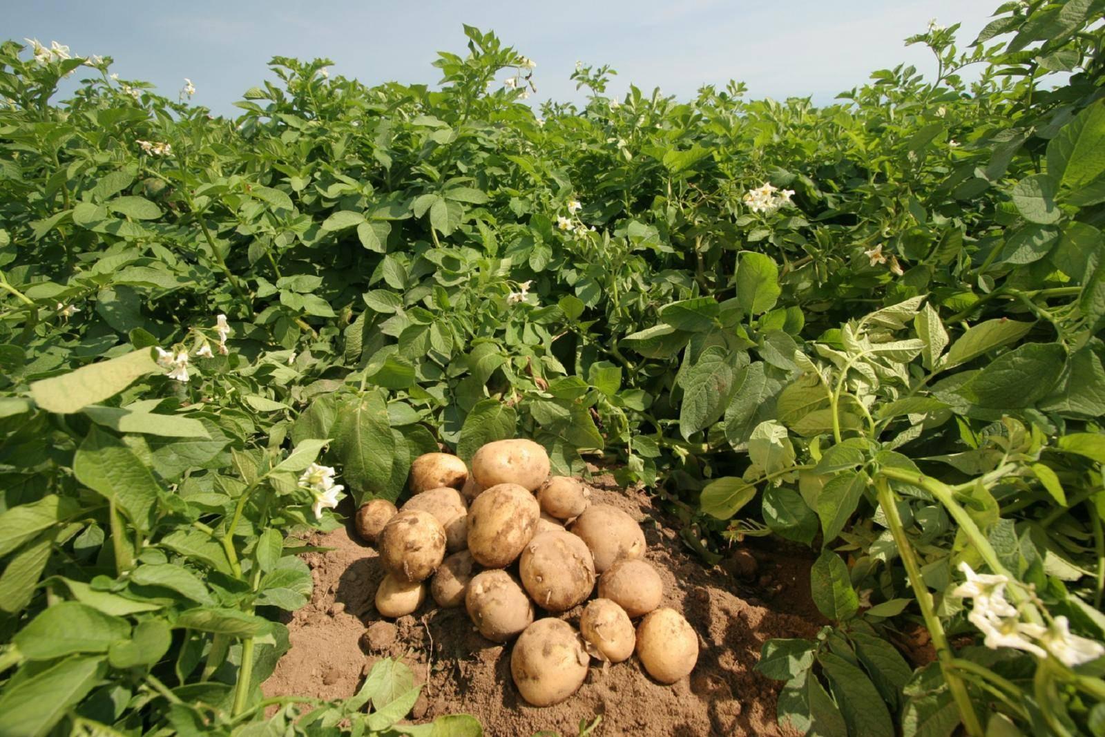 Удобрение при посадке растений: правила, выбор веществ, внесение