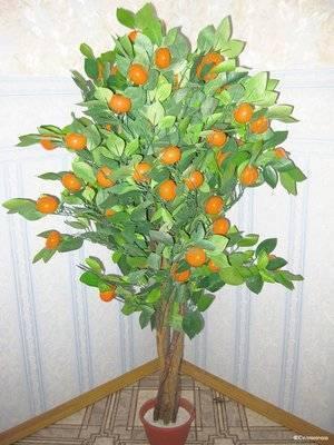 Как вырастить дерево мандарина из косточки в домашних условиях