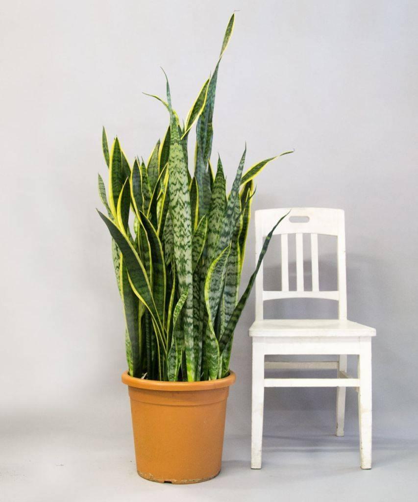 Цветы для детской комнаты: какие растения безопасны для ребенка