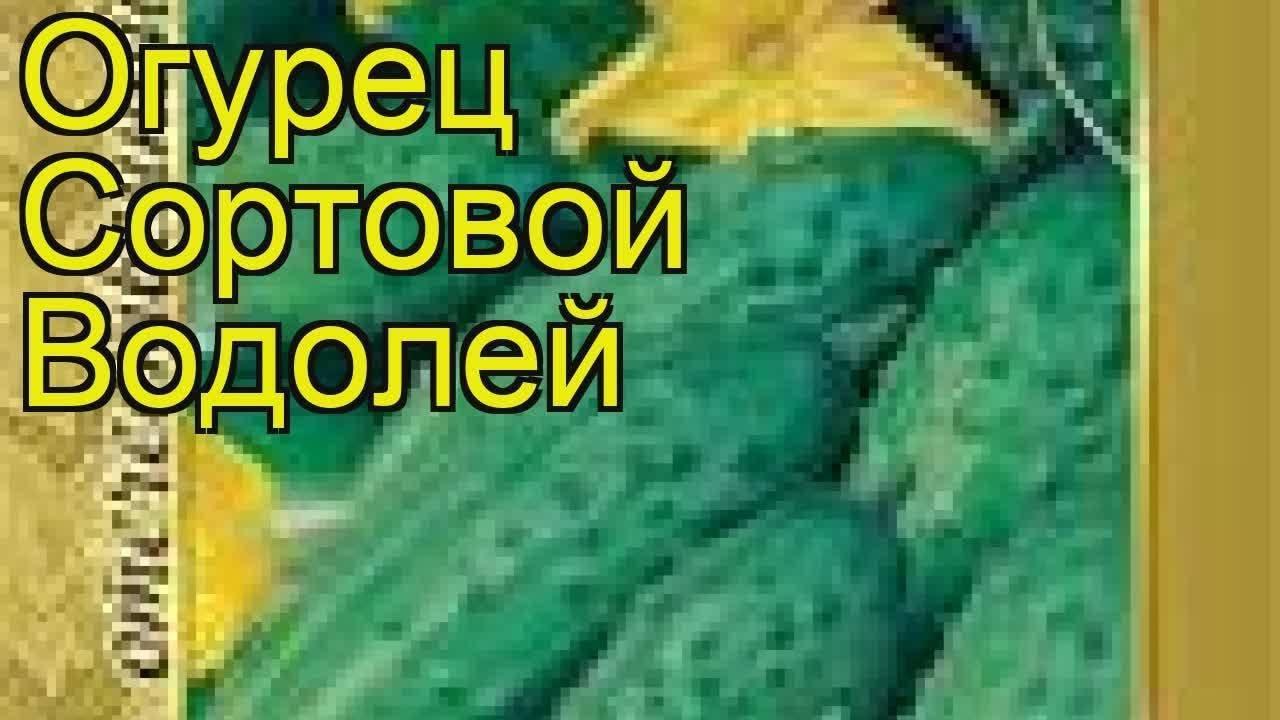 Огурец водолей