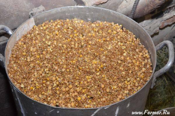 Как правильно прорастить пшеницу для еды