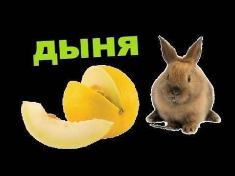 Можно ли кроликам давать дыню или ее корки?