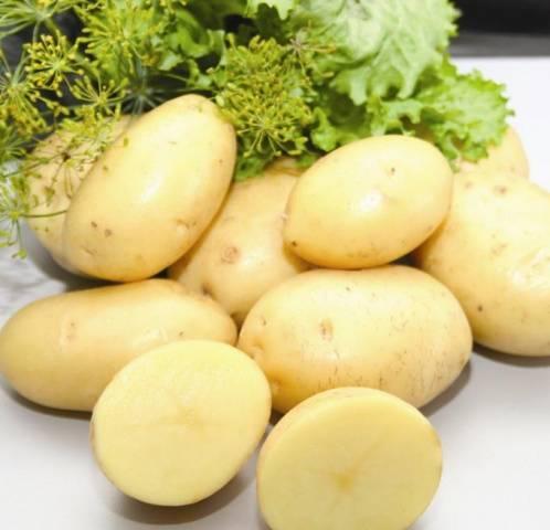 Ранние сорта картофеля для посадки в разных регионах россии.