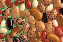 Какая фасоль полезнее - белая или красная? калорийность и свойства фасоли - общая информация - 2020